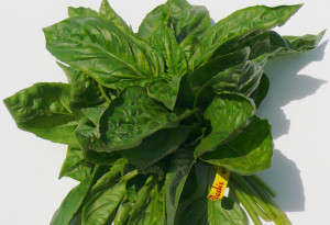 basil-bunched