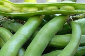 fava-beans-horz