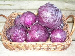 red cabbage (1)