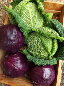 Savoy with red cabbage