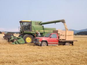 oat harvest-Schmuck Rd-Aug 2014 (8)