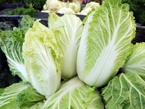 Napa cabbage-horz