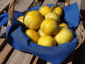 lemon cukes-horz