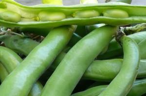 fava beans (4)