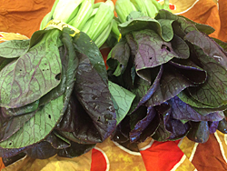 bok-choi-red-baby