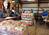 The packing shed crew getting carrots ready for markets and wholesale