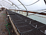 Vegetables plugs getting a start in the greenhouse.