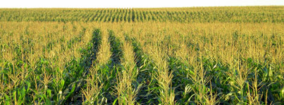 Declining nutrients in industrial agriculture