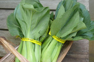 Bok choy, bunched