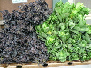 red cabbage raab and green cabbage raab