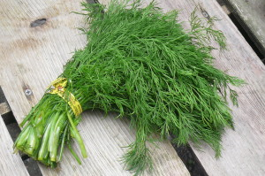 dill, bunched