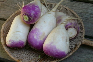 purple-top turnips in basket