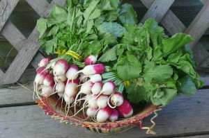 radishes with greens