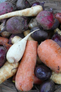 root medley - parsnips, carrots, beets, potatoes, turnips, rutabagas