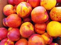 Nectarines from Sunnyslope Ranch, Wapato, WA