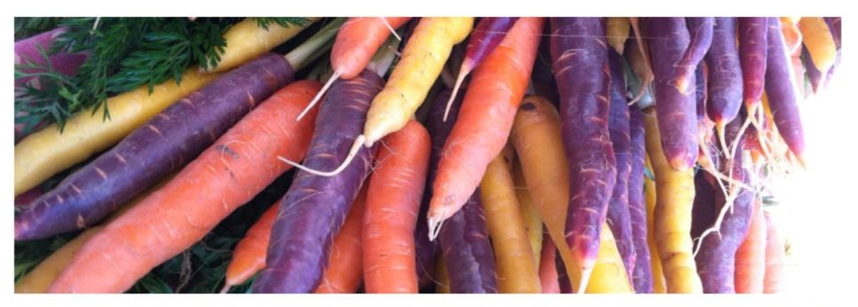 Rainbow carrots: purple carrots, yellow carrots, orange carrots
