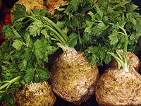 Celeriac, or celery root