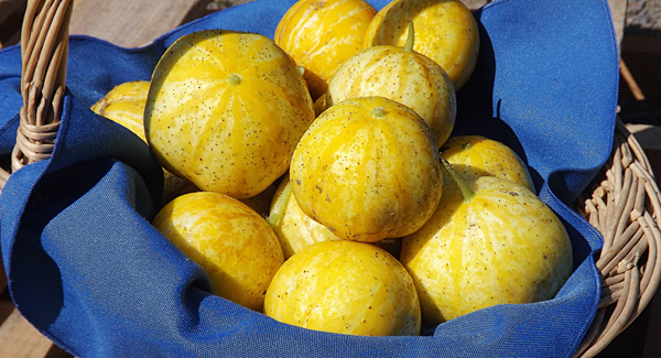 basket of lemon cucumbers