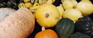 winter squash: delicata, sweet meat, sugar pie pumpkin, lower salmon river
