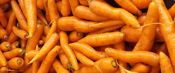 table carrots in bulk