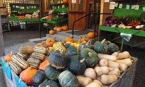 squash at the farm store