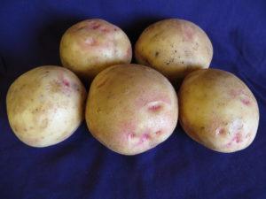 Alaska Bloom Potatoes