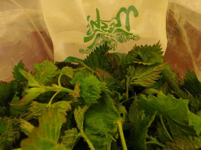 Nettles in a bag