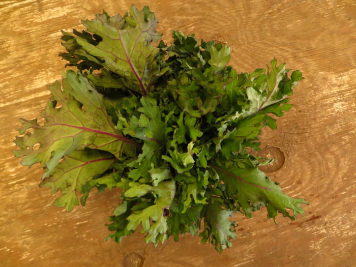 red russian kale raab