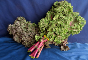 Nash's Red Kale, 2 bunches